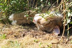 Bilbo sunbathing (christina.marsh25) Tags: bilbo cat sunbathing