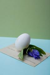 O (Edth) Tags: uova bianco fiori blu verde azzurro eggs white blue green flower lettera letter vintage old concettuale conceptual space still life photography fotografia