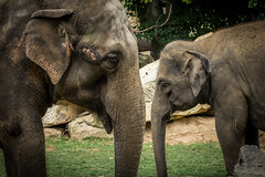 Elephant meeting (Petr Skora) Tags: slon zve nature praguezoo zoo