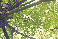 Swirling tree (Paulina_77) Tags: angle roof pov tree green branch branches light helios bokeh swirl swirly swirling vintage retro tones warm foliage leaves nature summer dof