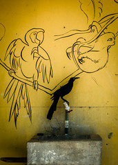 P3130527.jpg (francis_bellin) Tags: bleu plage costarica sable soleil oiseaux ocan playanosara jaune samara tag
