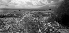 Plastic lens panos (wheehamx) Tags: 6x12 pano panorama beach plastic lens acros