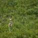 Um pequeno esquilo no meio dos campos
