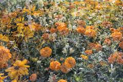 Flora Plenteous 71 (pni) Tags: flower plant multiexposure multipleexposure tripleexposure musiikkitalo musikhuset musiccentre helsingfors finland suomi pekkanikrus skrubu pni