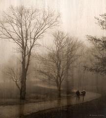 Misty Stroll (Grace Pedulla Dillon) Tags: road trees winter mist texture wet rain weather fog sepia landscape path scenic appalachia baretrees windingroad gracedillon gracedilloncom