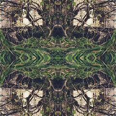 Kaleidoscopic (Tim Bow Photography) Tags: trees reflection tree art dark creativity mirror bush edited creative shrub kaleidoscopic porthcawl photographyart artphotography timbowphotography piclay welshcreative