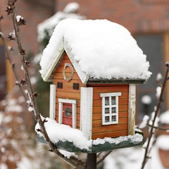 schnee winter orange snow birdhouse vogelhäuschen