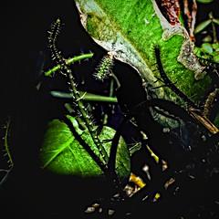 vert et noir (domiloui) Tags: flowers house composition lumiere lorraine couleur plantes ambiance nuances cooliris abaucourt