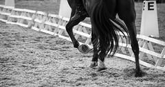 Dressage / hunter (cedric.harbulot) Tags: horse sport club cheval la nikon sigma cavalier concours nouvellecaldonie newcaledonia equestrian horseman dressage questre nouma gourmette 18250mm d5300