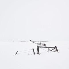 Prairie Winter II (Sandra Herber) Tags: winter snow canada fence alberta highkey minimalism minimalist