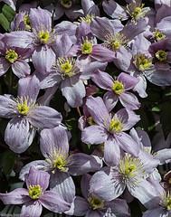 Alley Flowers (mjardeen) Tags: flower color focus minolta sony wa mf nik tacoma manual f28 135mm a7ii efex