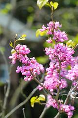 DS7_6276.jpg (d3_plus) Tags: street sky plant flower macro nature japan walking spring scenery bokeh outdoor fine daily bloom  streetphoto toyama  tamron gw    dailyphoto    thesedays tamron90mm hokuriku   fineday        tamronmacro  tamronspaf90mmf28  tamronspaf90mmf28macro11 d700 172e   tamronspaf90mmf28macro nikond700  spaf90mmf28macro11 nikonfxshowcase 172en