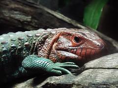 DSCF0171 (Stonehenge 68) Tags: zoo birmingham snake alabama lizard plantation antebellum birminghamzoo arlingtonhouse
