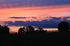 IMG_6493 (jroltmanns_) Tags: sunset pinksky kentucky lexington bluegrass fence trees sky cloud landscape outdoor dusk field