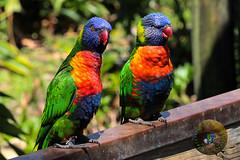 Brevard Zoo Melbourne, Florida (Glotzsee) Tags: bird nature birds outdoors zoo florida wildlife zooanimals brevardzoo brevardcounty zoosofnorthamerica glotzsee glotzseefloridaimages