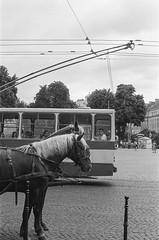 (elgartheseven) Tags: ukraine lviv horse street bus