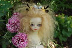More pinks (Little little mouse) Tags: soom syenhuman teeniegem bjd dollfie dianthus pinks
