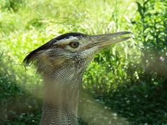DSCF0211 (Stonehenge 68) Tags: zoo birmingham snake alabama lizard plantation antebellum birminghamzoo arlingtonhouse