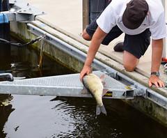 Marina (Maria Eklind) Tags: city fish water marina boats se skne sweden sverige bream fisk ystad brax skneln marinan ystadkommun
