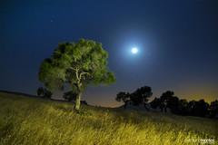 El rbol y La Luna (arturomontes) Tags: world moon landscape arbol star fuji nightshot paisaje luna nocturna xt1
