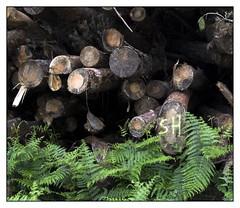 Rennes Forest #2 (Oeil de chat) Tags: fujifilm x20 couleur foret vert nature serie promenade