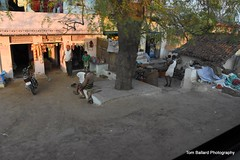 D72_9459 (Tom Ballard Photography) Tags: 20160314 indiaadventure part4 flowers cows pigs poop peeing people trash taxi food