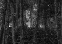 Through the Forest (chris watkins wales) Tags: munnar kerala india