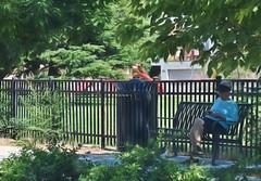 Shady Place- HBM! (Jo Zimny Photos) Tags: fence fencedfriday lady shade bench can trees bushes foliage texting jogger playground grass green toys