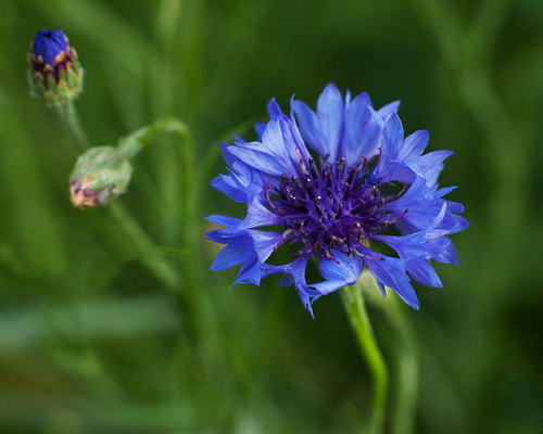 20140804_garden flowers_0017