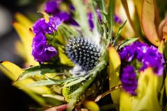 207-365 Flowers (cohenvandervelde) Tags: 365project australia cohenvandervelde cowes creativecommons explore flickr flickriver melbourne scout canon color colour flowers lights shadow