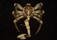 (Trk) Tags: exoskeleton spider ridleyscott
