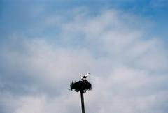 Family Home (.Kaisu.) Tags: estonia asahipentaxspotmatic asahipentaxspotmaticspii analogue kodak kodakektar100 ektar filmphotography vintageanalogue industar502 industar 35mm m42