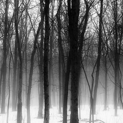 Winter Forest In Fog 004 (noahbw) Tags: d5000 nikon abstract blackwhite blackandwhite branches bw fog foggy forest hellernaturecenter landscape mist misty monochrome natural noahbw snow square trees winter woods