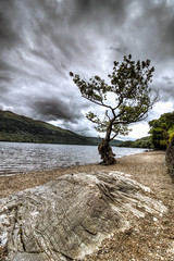 Loch Lomond (GraBor) Tags: lochlomond tree scotland