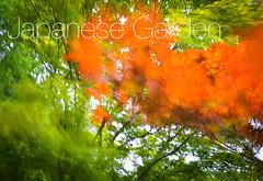 Hasselt - 04 aout 2016 - 1 (Thierry Valdin) Tags: jardinjaponais japon hasselt parc belgique tuin japanesetuin belge valndereen flandre