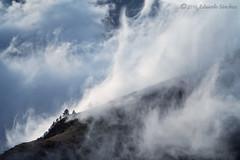 solos entre nubes (Edu.San.) Tags: paisaje arboles naturaleza belagua navarra espaa