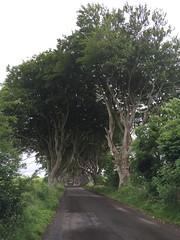 IMG_9463 (raehyunie) Tags: dark hedges ireland