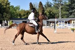 DSC_0835 (2) (ploufjf_64) Tags: paus show jumping chevaux pau 2016