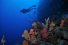 Scuba Diving Dominica (Izzysan) Tags: dominica dominicaphotography dominicaphoto dominicaimage diving underwater underxmag nikon nikondslr nikonslrgroup nikondigital ikelite inon sigma sigma1020 recreation nationalpark marinereserve scuba scubadiving reef reefscenic seasc