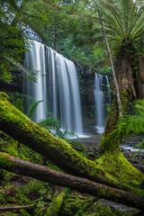 Russell Falls Gondwana (robertdownie) Tags: water tree rocks green waterfall australia moss cascades tasmania ferns tasmanian wilderness world heritage area trees falls russell mount field national park