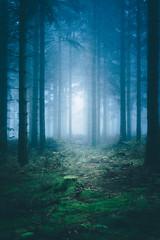 The Magic Gate (sfp - sebastian fischer photography) Tags: landschaft natur oktober2016 schwarzwald landscape nature blackforest wald brend nebel mist