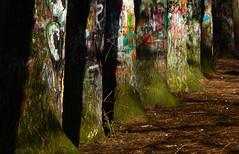 Graffitrees (offroadsound) Tags: urban primavera graffiti spring colours printemps frühling treeart graffitrees