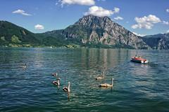 Vom hsslichen Entlein.... (nafoto!) Tags: lake austria sterreich schwan traunstein traunsee leicaq eboot