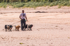 Dogwalker on Yellowcraigs Beach (Briantc) Tags: scotland eastlothian yellowcraigs dirleton dog dogwalker dogs