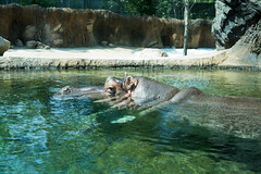 1P8A2657 (SimpleCurses) Tags: memphis zoo