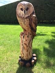Owl for arbtalk