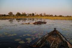Hippo Attack (www.mattprior.co.uk) Tags: adventure adventurer journey explore experience expedition safari africa southafrica botswana zimbabwe zambia overland nature animals lion crocodile zebra buffalo camp sleep elephant giraffe leopard sunrise sunset