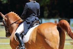 IMG_4679 (dreiwn) Tags: horse pony horseshow pferde pferd equestrian horseback reiten horseriding dressage reitturnier dressur reitsport dressyr dressuur ridingclub ridingarena pferdesport reitplatz reitverein dressurreiten dressurpferd dressurprüfung tamronsp70200f28divcusd jugentturnier