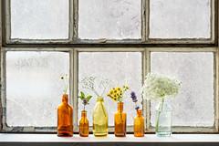 Summerflowers... (CarolienCadoni..) Tags: sonyslta99 sal70200g2 sony flowers summer window light
