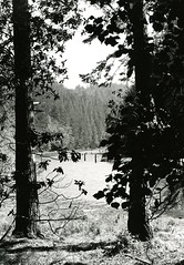 Albion River viewed through trees (PUC Special Collections) Tags: california coastal mendocino 1960s norcal 1970s biology tidepools puc albion estuaries mendocinocounty pacificunioncollege albionfieldstation albionbiologicalfieldstation pucbiologydepartment